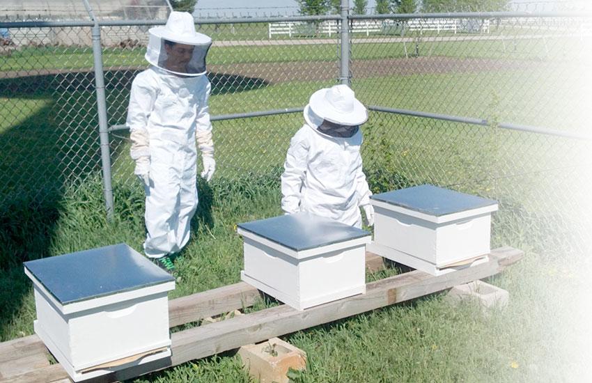 пчеларство и бубарство